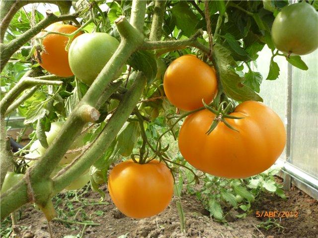 Сорта помидоров для ленинградской области - видео