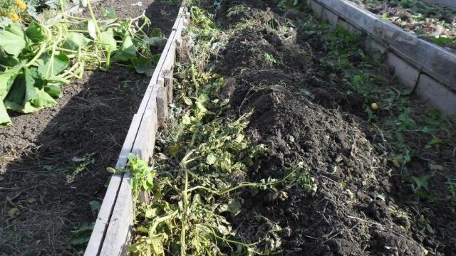 Осенние работы обрабатываем землю от фитофторы