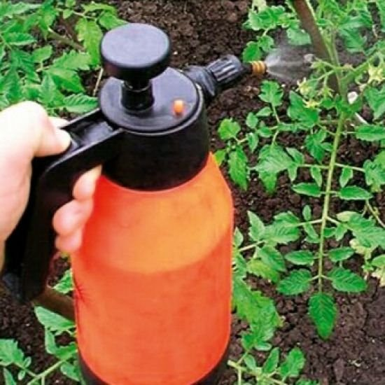 Чем опрыскивать помидоры от болезней и для профилактики