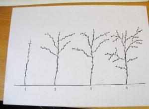 Как правильно обрезать малину осенью схема