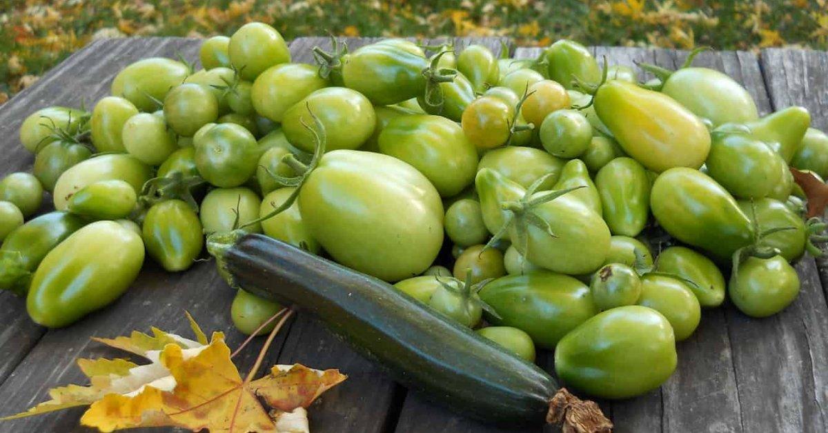 Зеленые помидоры полезные свойства