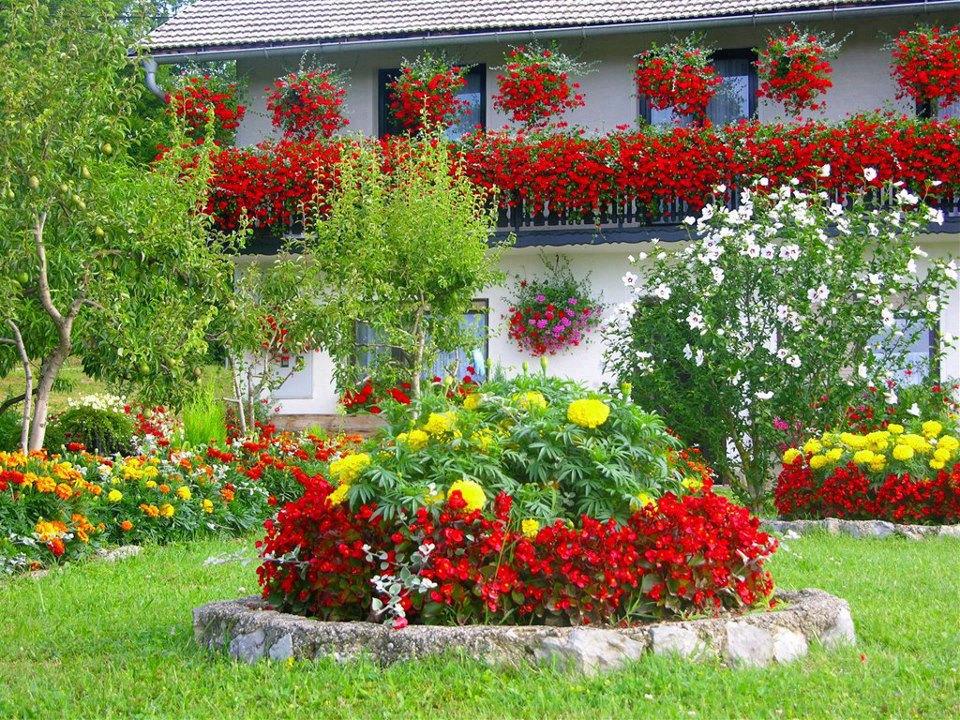 Высокорослые однолетние цветы