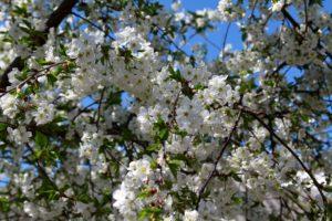 8-22-300x200 Registered Users | Любимый сад | Любимый сад
