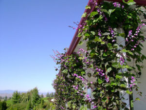 Самые неприхотливые однолетники, цветущие все лето: с фото и названиями