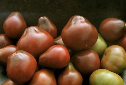 Томат Красная грушка (Червона груша): отзывы об урожайности помидоров, описание и характеристика сорта