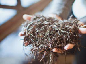 Как вырастить шампиньоны на огороде
