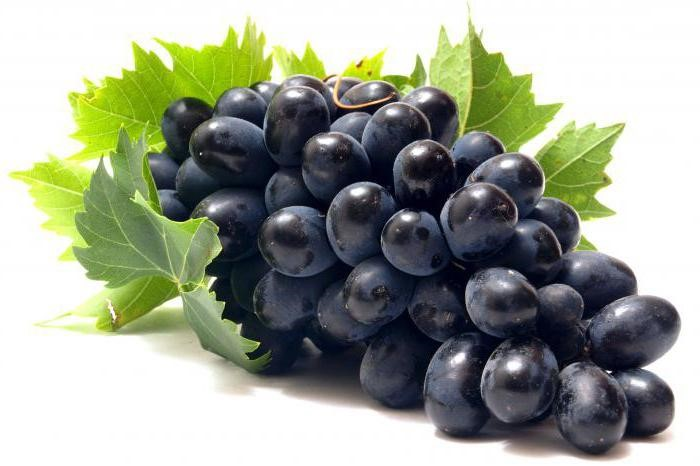 Виноград молдова сроки созревания