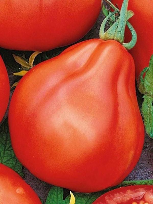 Томат Желтый трюфель: описание сорта помидора с фото