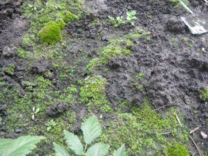Как определить кислотность почвы по сорнякам