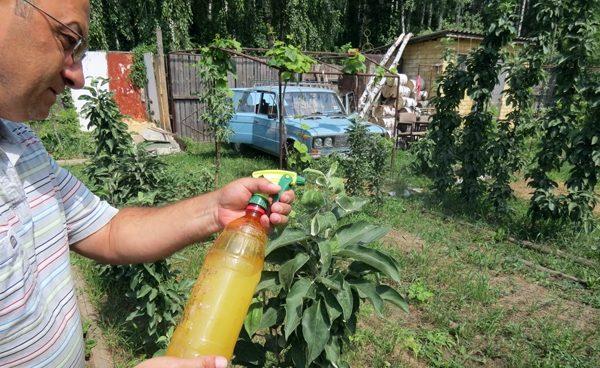 Борьба с тлей на плодовых деревьях