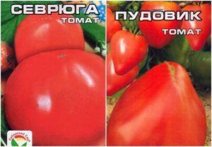 Томат Севрюга: описание сорта, фото, отзывы