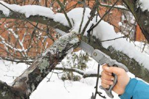 Обрезка плодовых деревьев зимой: видео для начинающих