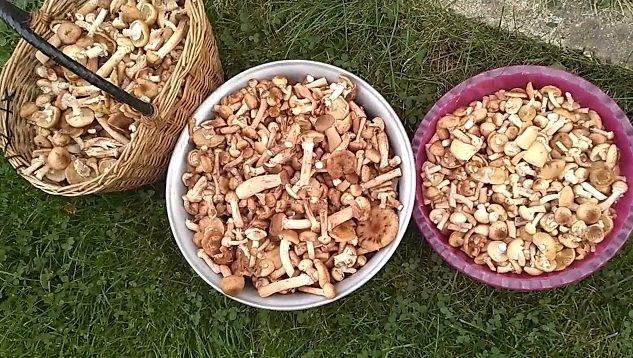 Сколько варить грибы перед заморозкой на зиму