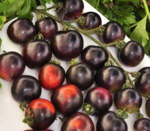 Томат Черная гроздь F1: отзывы + фото