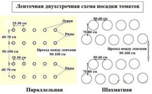 Томат Снежный барс: характеристика и описание сорта