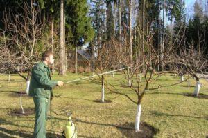 Обработка яблони от парши весной