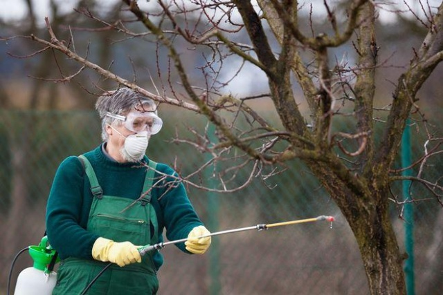 Для чего обрабатывают деревья медным купоросом