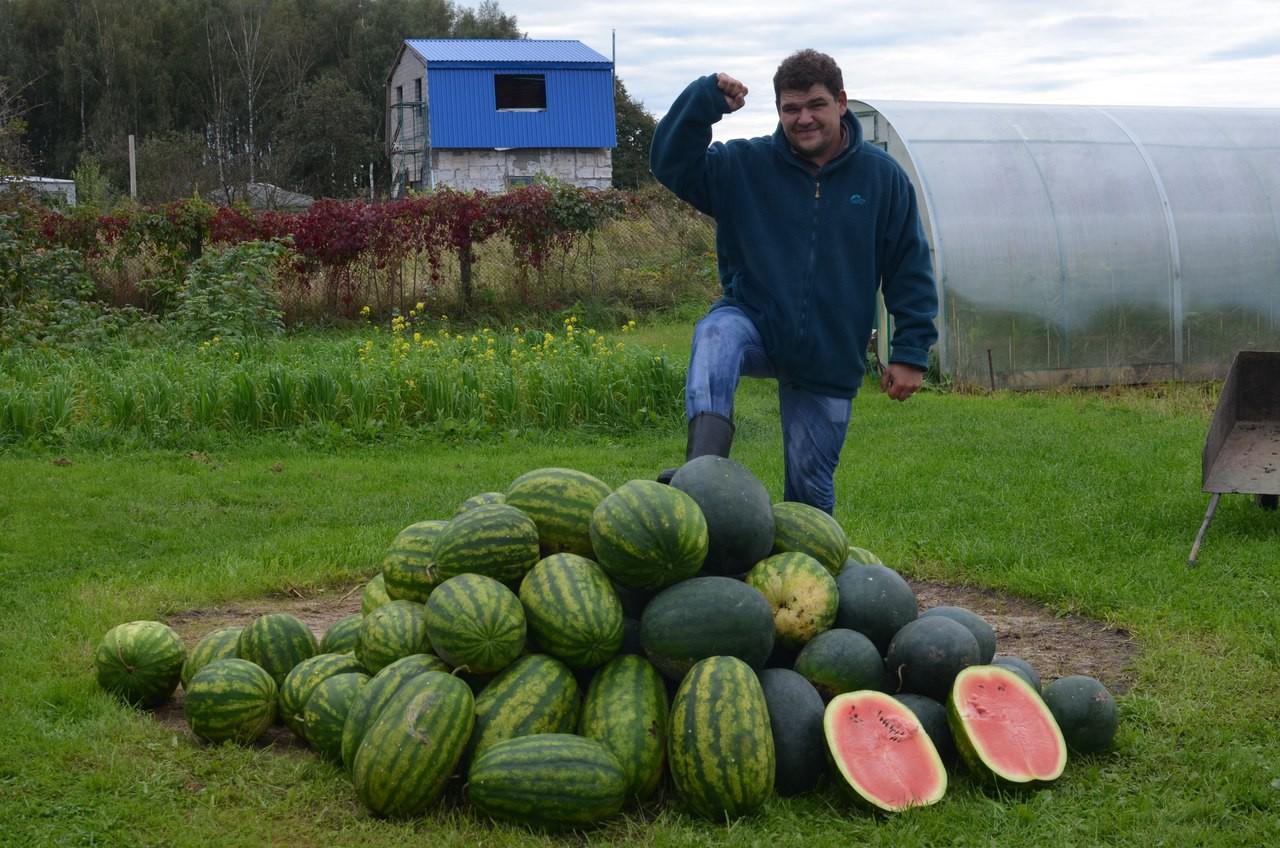 Выращивание арбузов в открытом грунте и теплице в Сибири посадка и уход