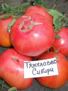 Томат Тяжеловес Сибири: отзывы, фото