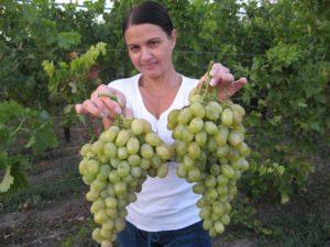 Виноград Валентина: описание сорта, фото, отзывы