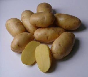 Картофель Импала: характеристика, фото