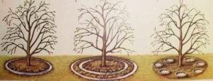 Яблоня Звездочка: описание, фото, отзывы