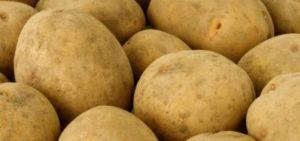 Картофель Скарб: описание сорта, фото и отзывы