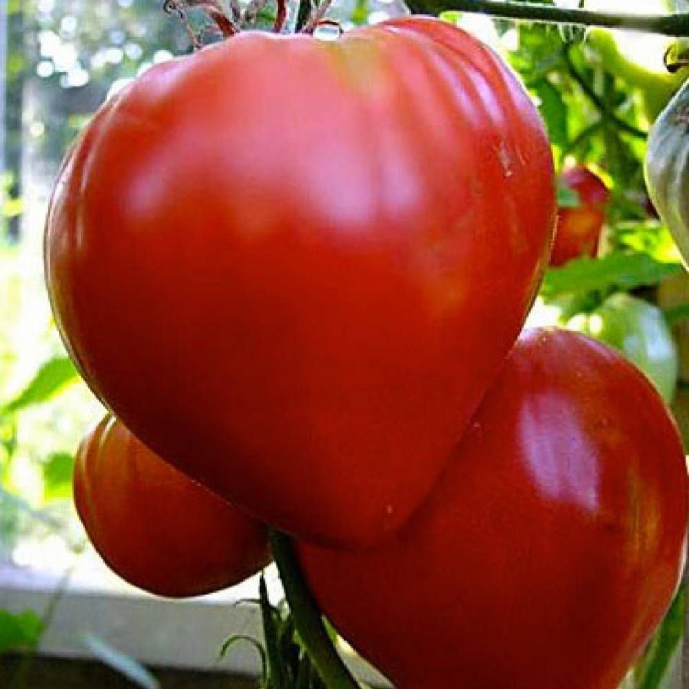 Томат Пылающее сердце описание сорта характеристики и выращивание с фото