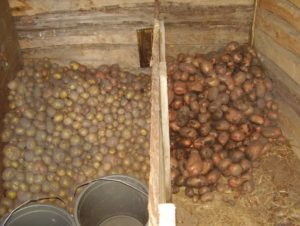 Картофель сорта Леди Клер: отзывы и описание