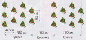 Томат Янтарный мед: отзывы и фото