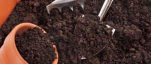 Томат Полосатый шоколад: отзывы и описание