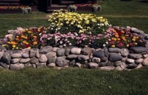 Семена однолетних цветов цветущих все лето