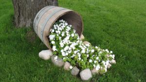 Однолетние цветы, цветущие без рассады: название + фото