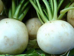 Как правильно выращивать редьку в открытом грунте?