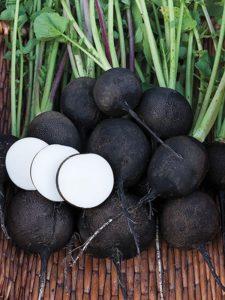 Как сажать черную редьку в открытый грунт