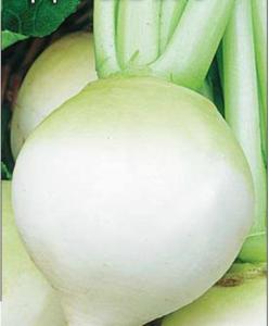 Китайская редька (маргеланская): чем полезна, вред, калорийность