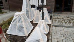 Как правильно обрезать грушу осенью: схемы, фото, для новичков, сроки, подготовка к зиме