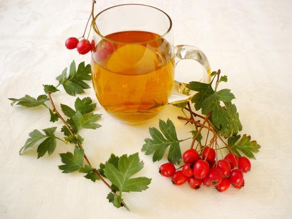 Боярышник — как заваривать и как пить полученный напиток