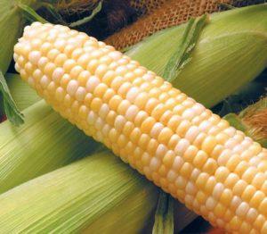 Кукуруза для попкорна: из каких сортов делают, выращивание