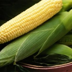 Виды кукурузы: синяя, золотая, красная, кремнистая