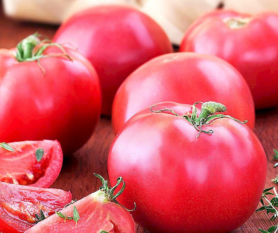 Томат Сахарные уста описание и характеристика сорта урожайность с фото