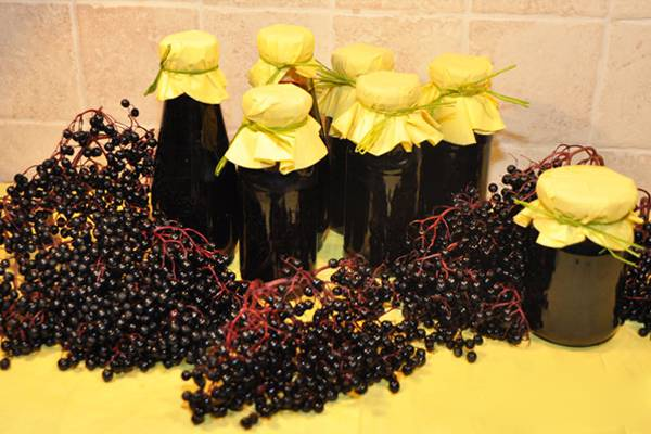 Желе из черники: рецепты без желатина, с желатином, без варки