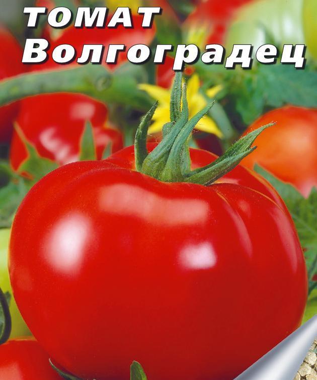Помидоры Волгоградец: описание сорта, отзывы и фото