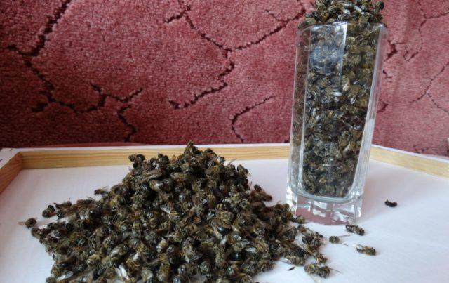 Подмор пчелиный: настойка на спирту, на водке, применение в лечебных целях