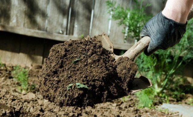 Сорт картофеля Кумач: характеристика, отзывы, урожайность