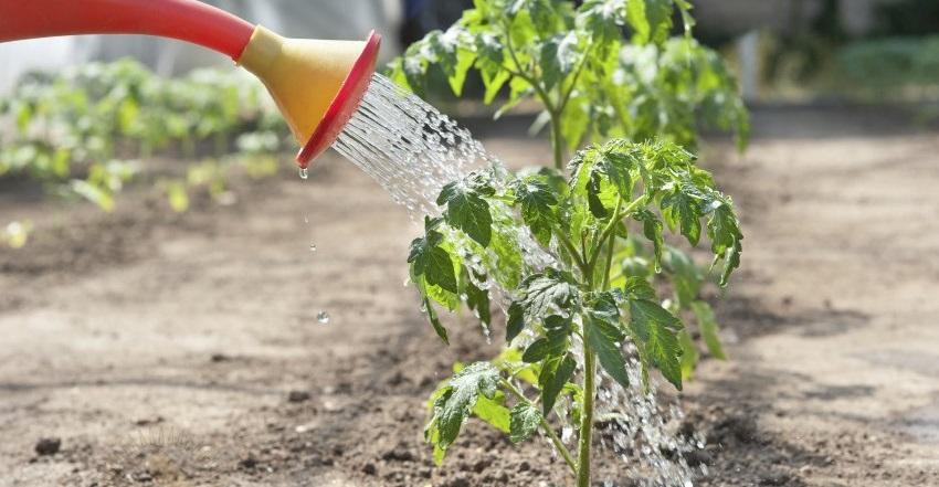 удобрение для рассады для образования корней