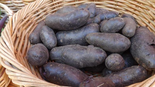 Картофель Гурман: характеристика сорта, отзывы, урожайность