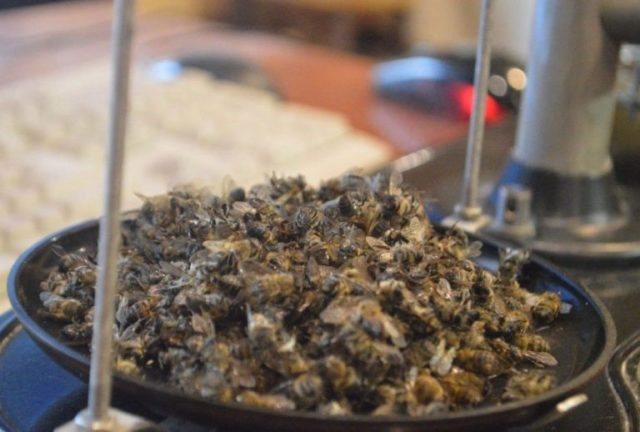 Пчелиный подмор: рецепты для суставов, применение