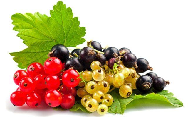 Смородина сладкая, урожайная: черная, красная, белая, крупноплодная