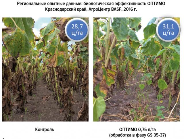 Фунгицид Оптимо: инструкция по применению для защиты кукурузы, сои и подсолнечника